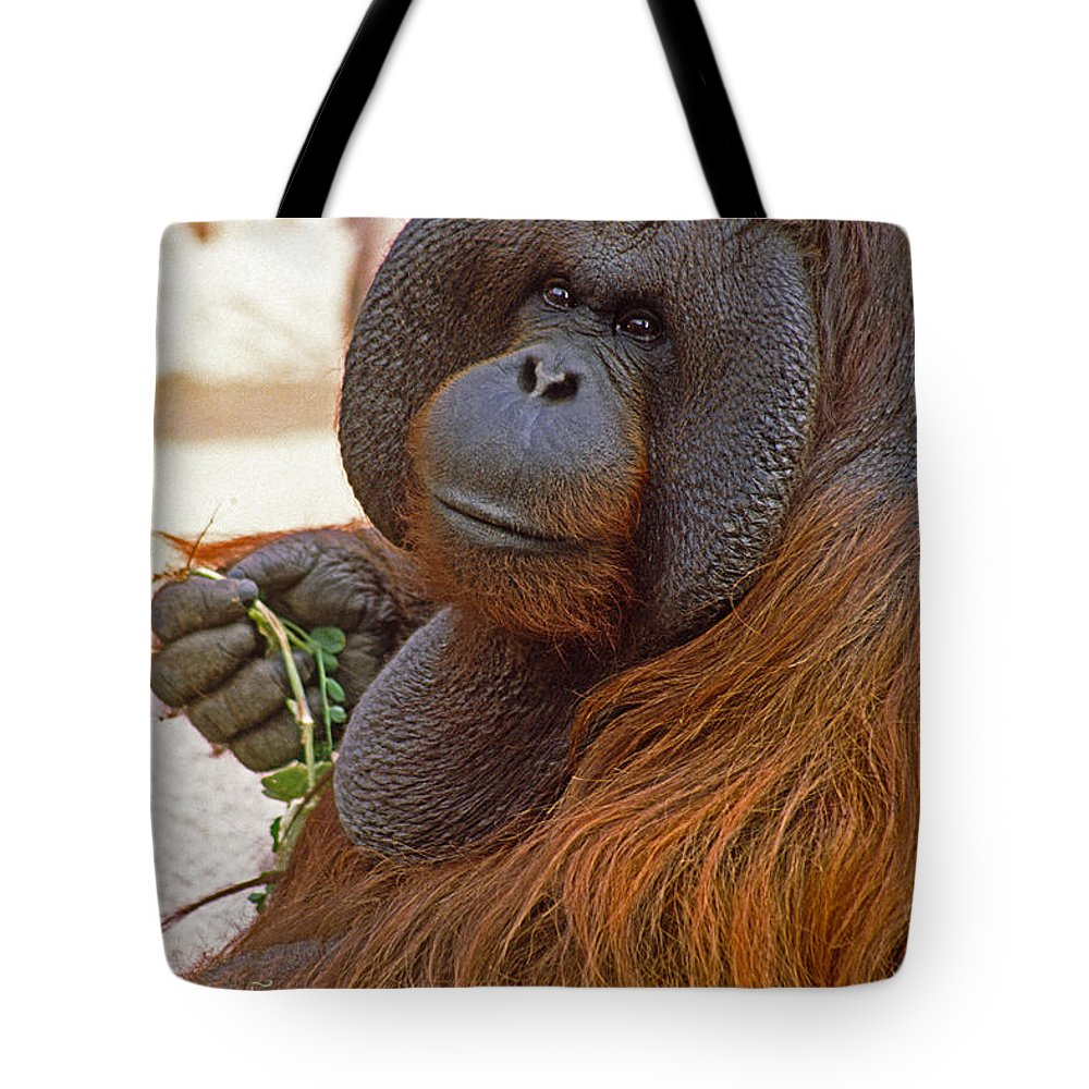 Orangutan Tote Bag featuring the photograph Big Daddy by Michele Burgess