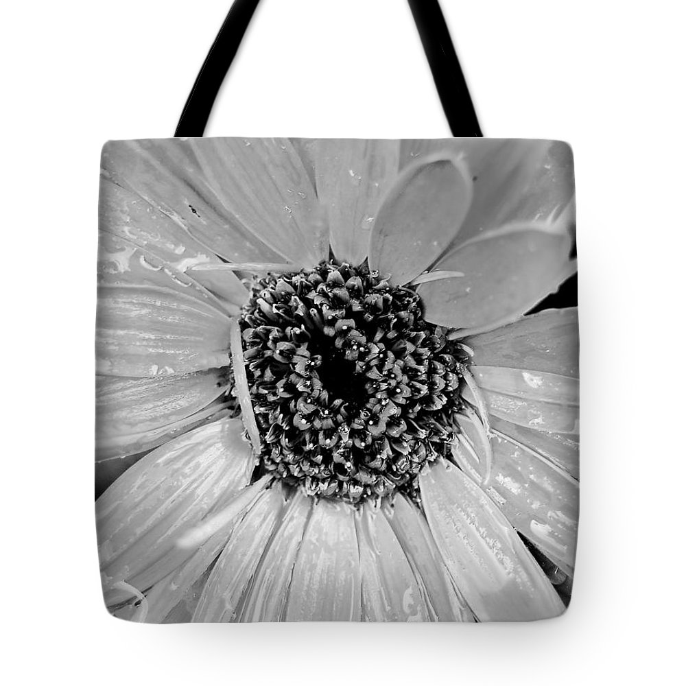 Gerber Daisy Tote Bag featuring the photograph Black And White Gerbera Daisy by Amy Fose