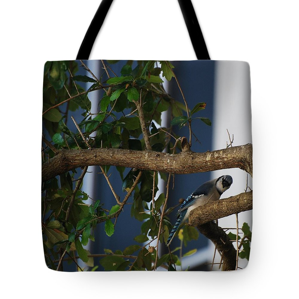 Birds Tote Bag featuring the photograph Blue Bird by Rob Hans