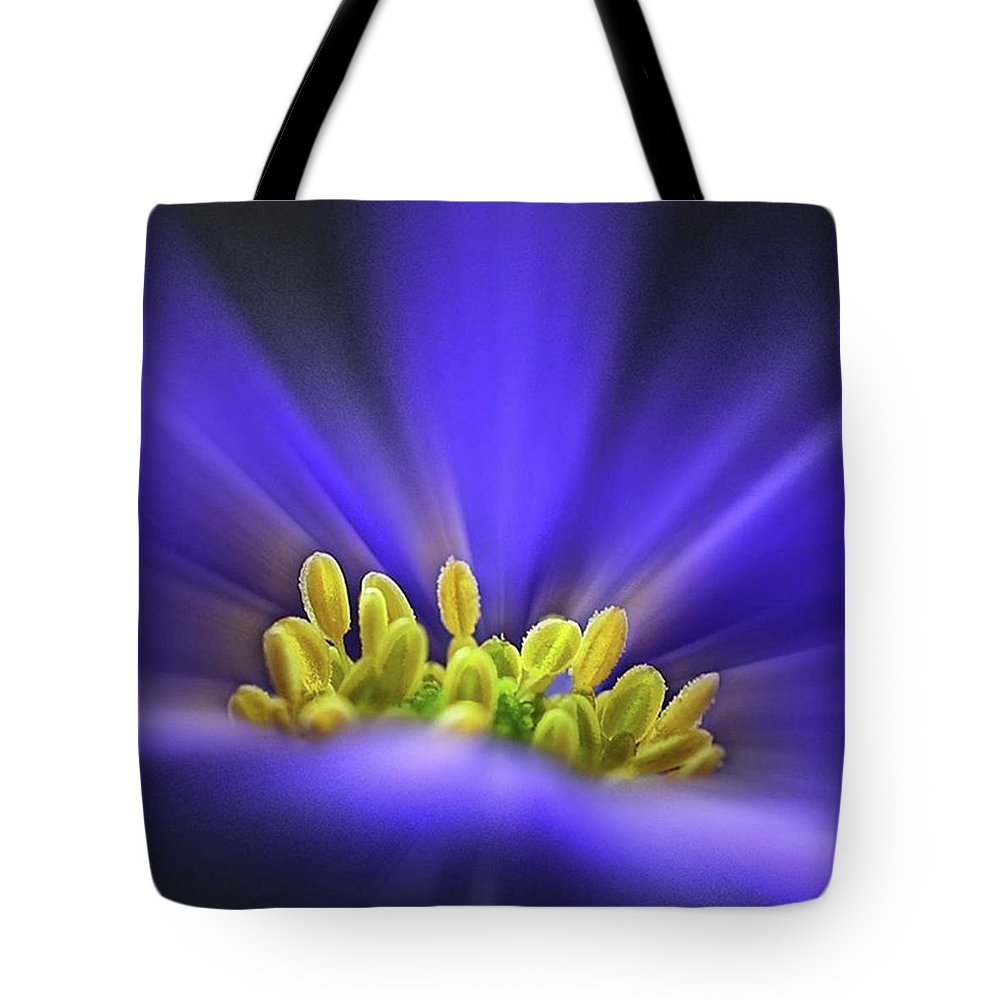 Beautiful Tote Bag featuring the photograph blue Shades - An Anemone Blanda by John Edwards