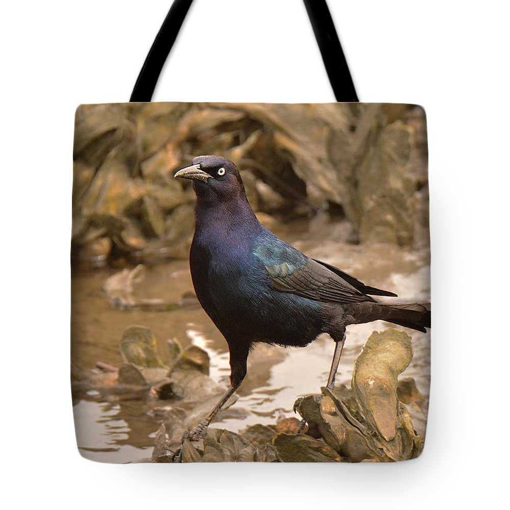 Bird Tote Bag featuring the photograph Boat-tailed Crackle by Alan Lenk