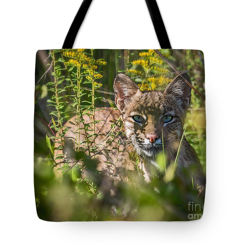 Lynx Tote Bag featuring the photograph Bobcat Lynx In Hiding by Anne Kitzman