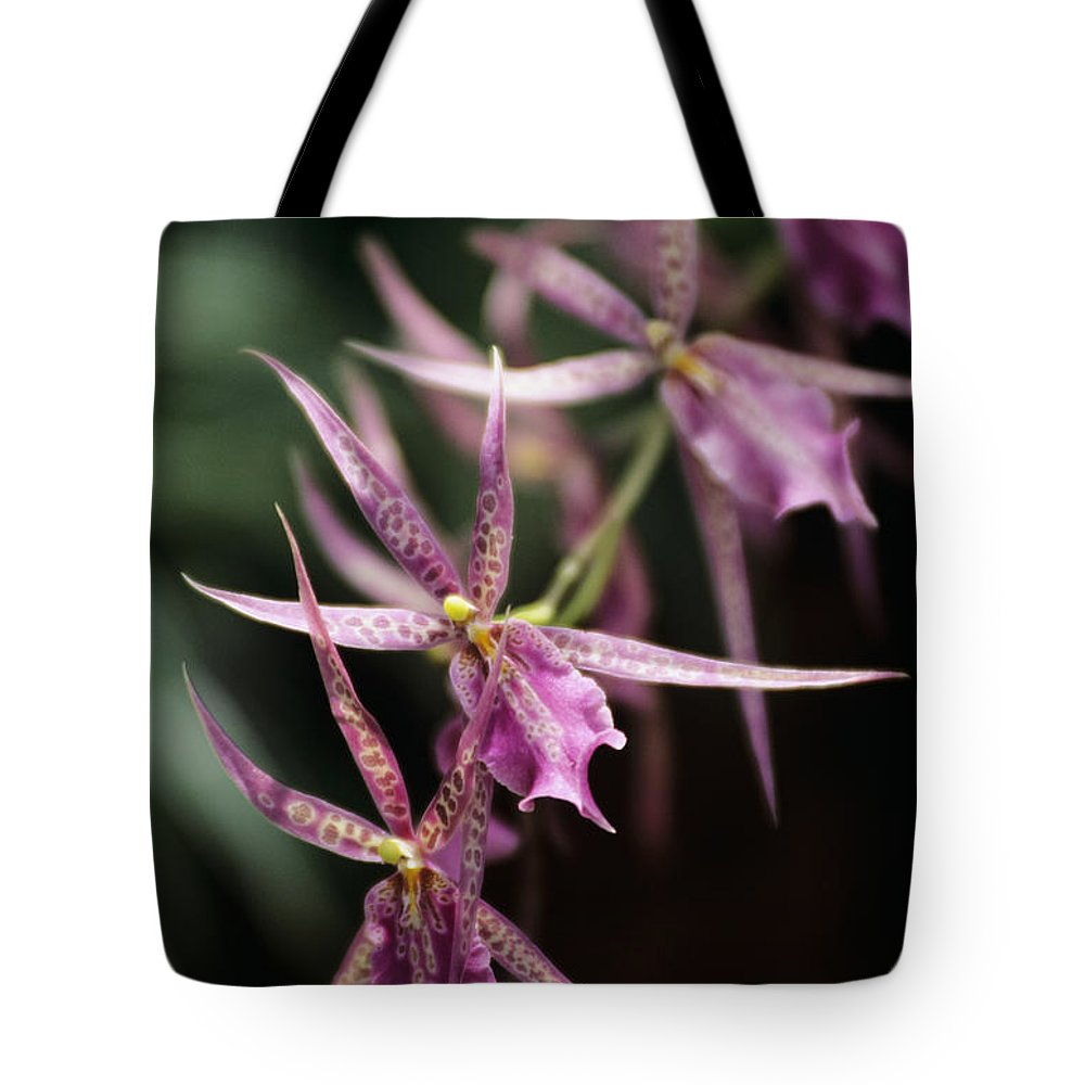 26-pfs0092 Tote Bag featuring the photograph Branch Of Pink by Allan Seiden - Printscapes