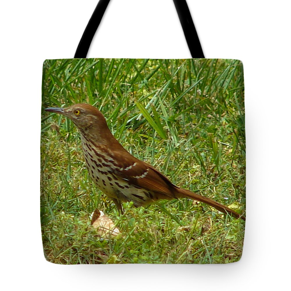 Bird Tote Bag featuring the photograph Brown Thrasher by Carl Moore