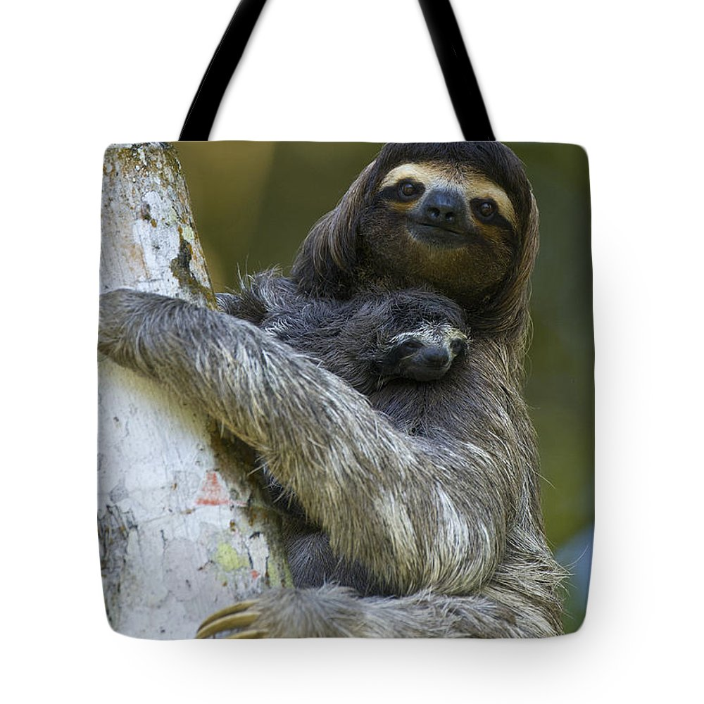 Mp Tote Bag featuring the photograph Brown-throated Three-toed Sloth by Suzi Eszterhas