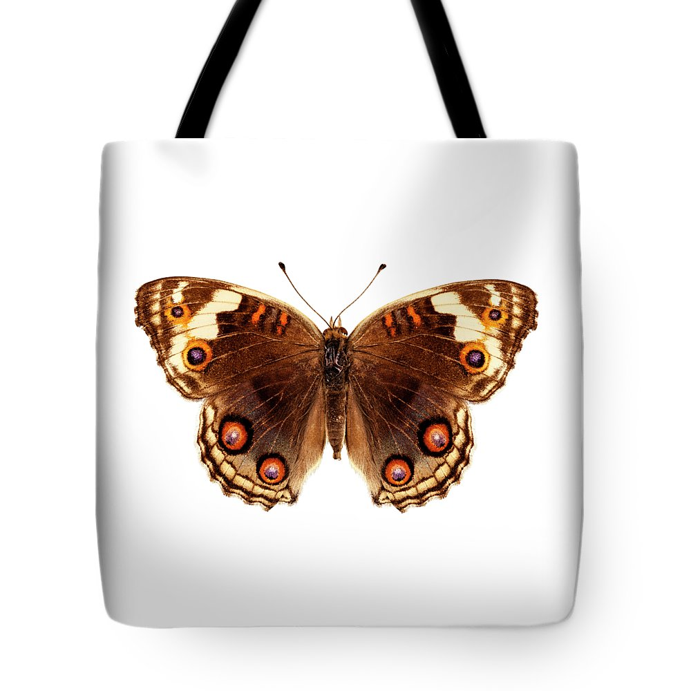 Indonesia Tote Bag featuring the painting Butterfly Species Junonia Orithya by Pablo Romero
