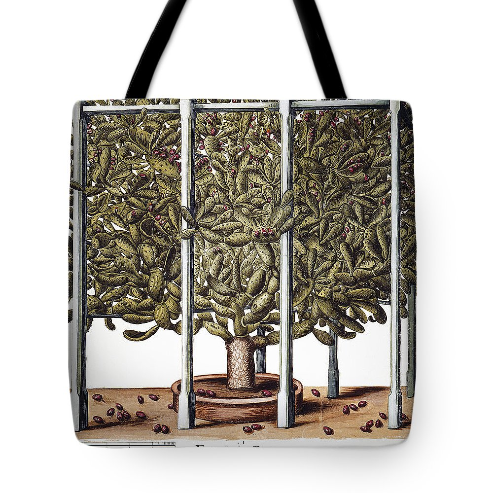 1613 Tote Bag featuring the photograph Cactus: Opuntia, 1613 by Granger