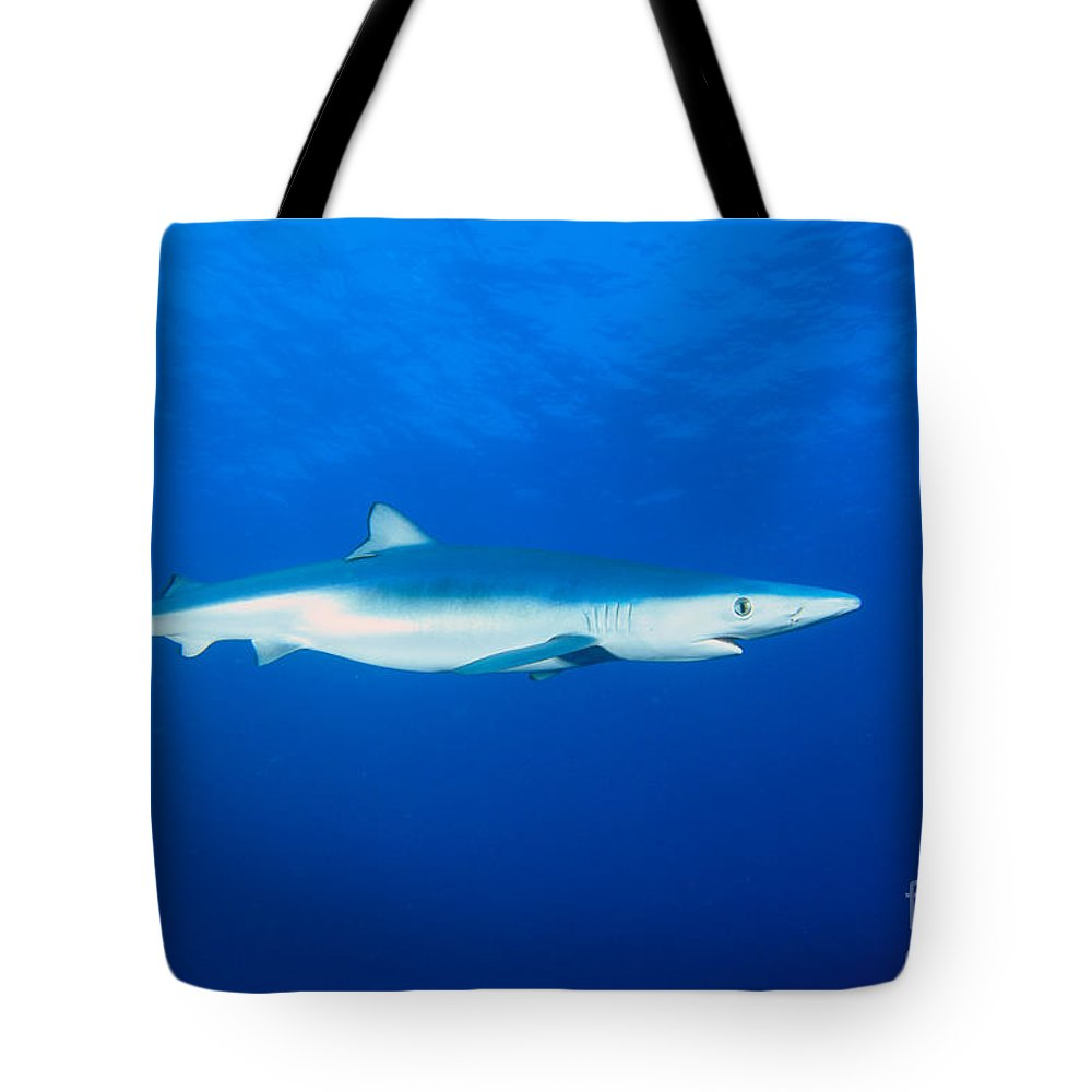 Animal Art Tote Bag featuring the photograph California, Blue Shark by Dave Fleetham - Printscapes