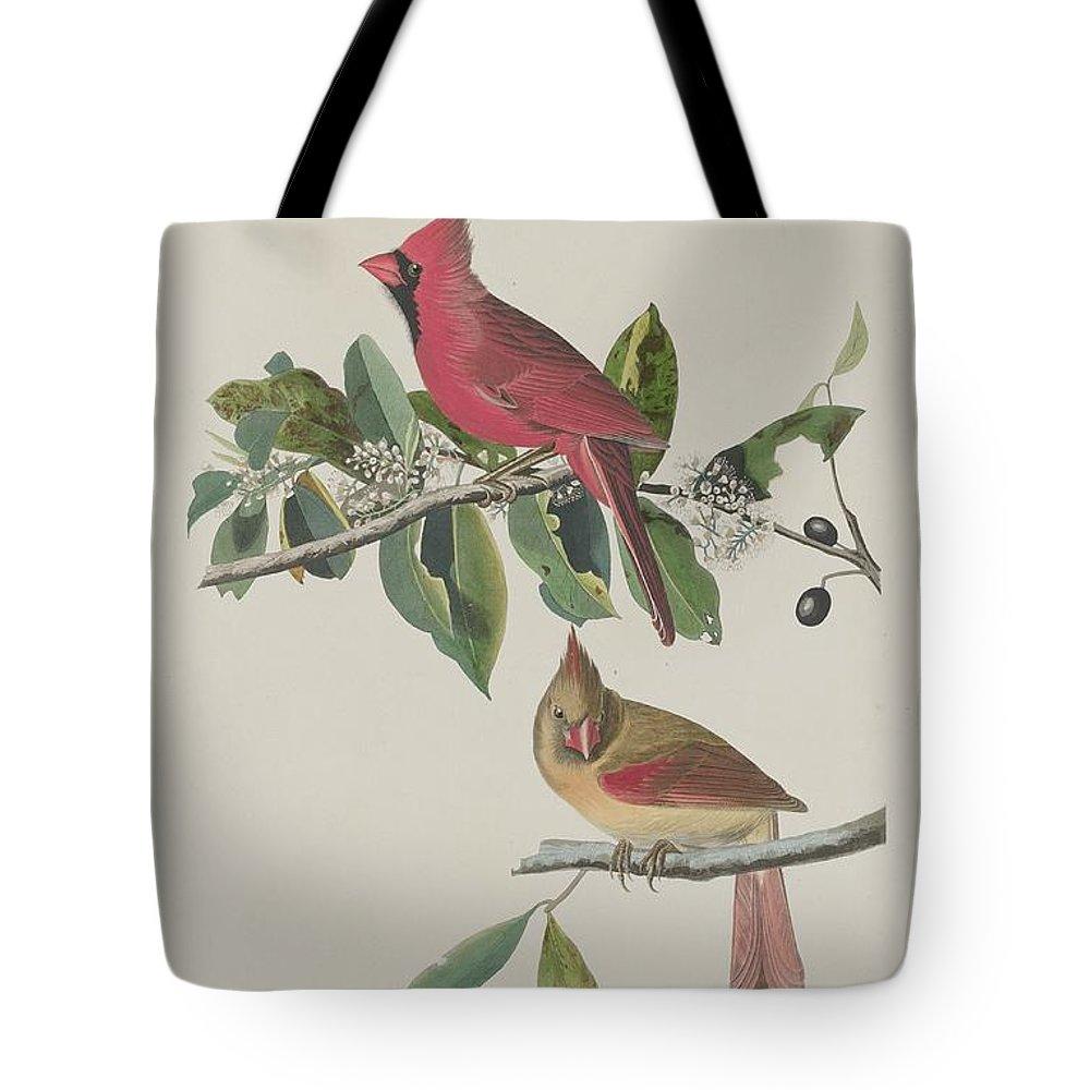 Audubon Tote Bag featuring the drawing Cardinal Grosbeak by Dreyer Wildlife Print Collections