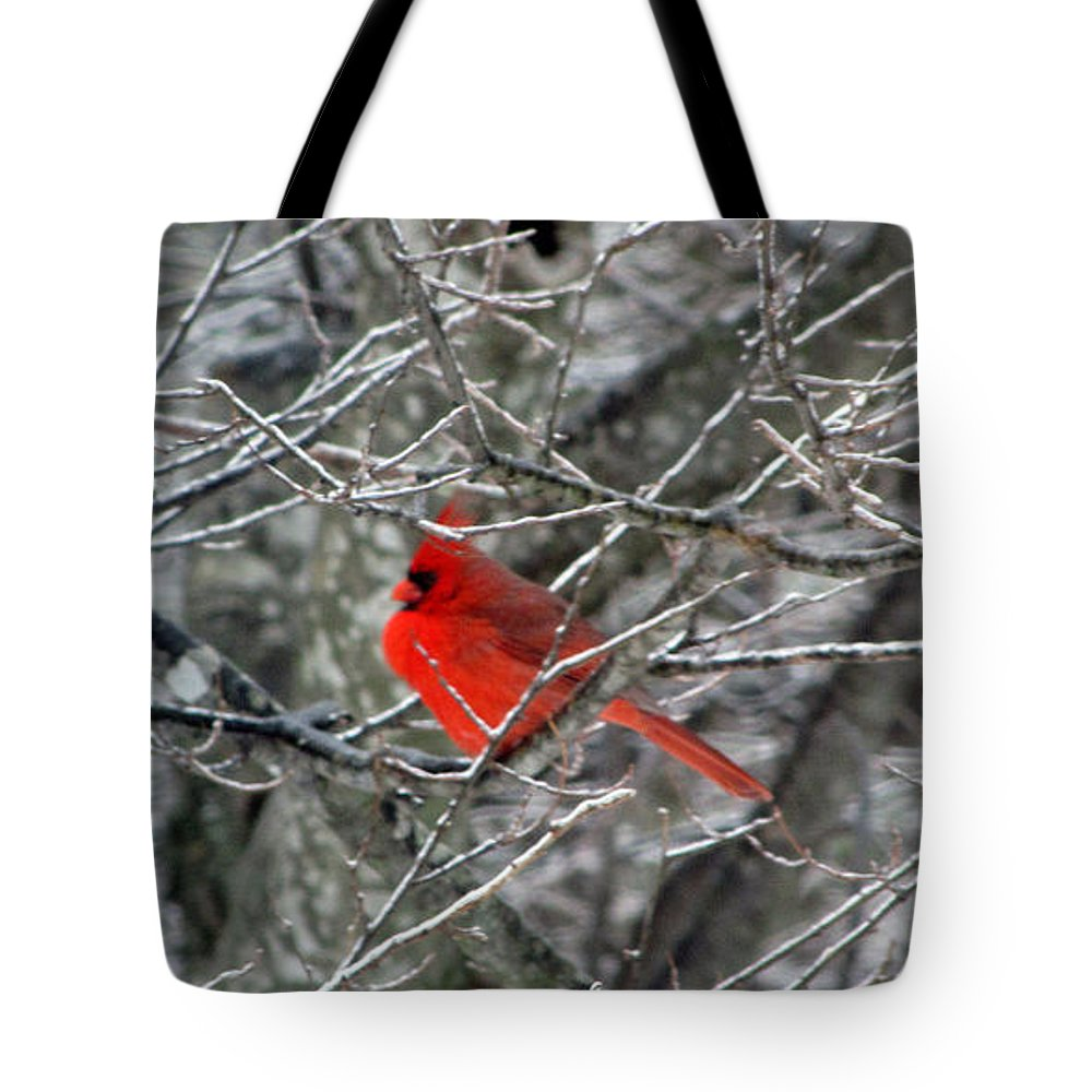Cardinal Tote Bag featuring the photograph Cardinal On Icy Branches by Amy Tyler