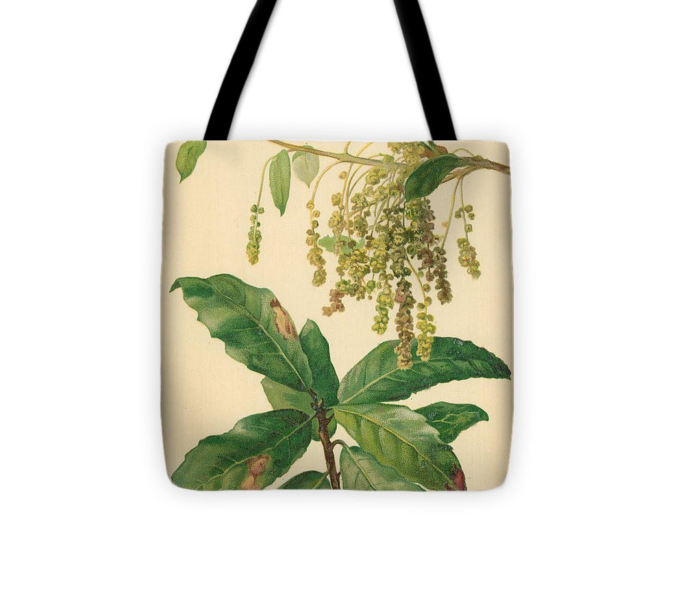 Catkin Tote Bag featuring the drawing Catkins And Leaves Of Holm Oak by William Henry James Boot