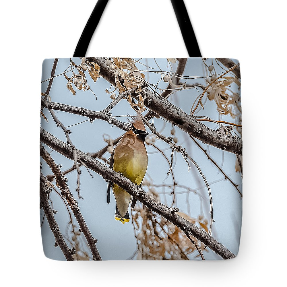 Waxwings Tote Bag featuring the photograph Cedar Waxwing Beauty by Yeates Photography