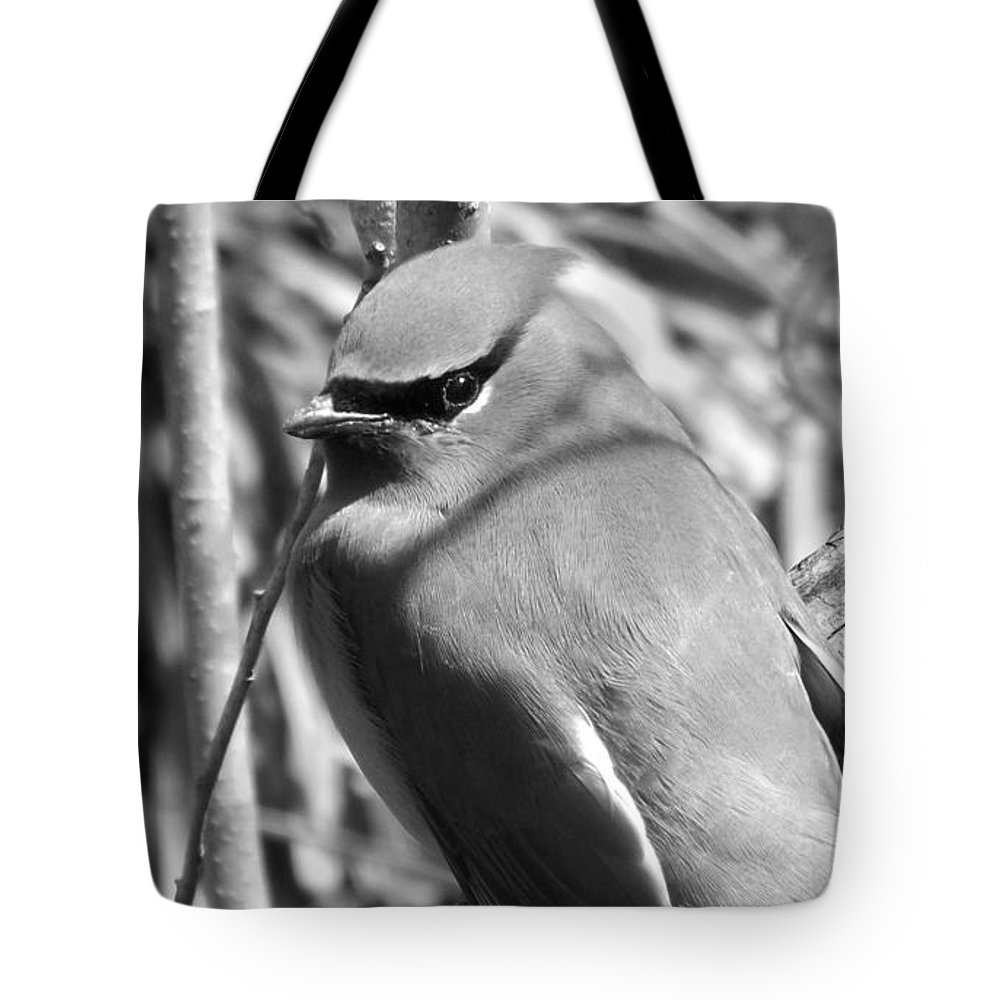 Black & White Tote Bag featuring the photograph Cedar Waxwing by Sara Raber