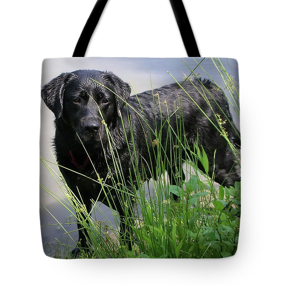 Dog Tote Bag featuring the photograph Chicago 0121 by Guy Whiteley