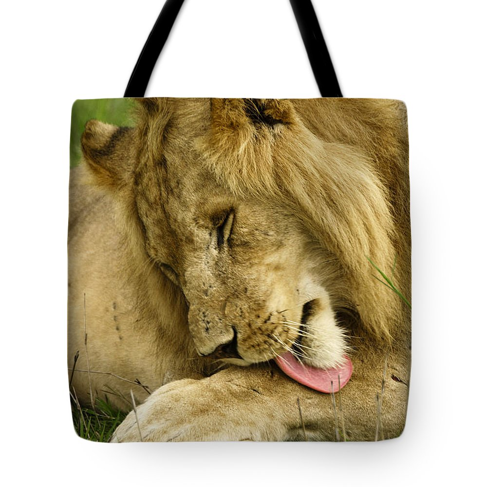 Lion Tote Bag featuring the photograph Cleaning Up by Michele Burgess