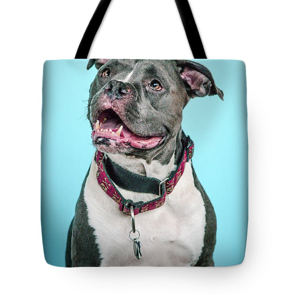 Dog Tote Bag featuring the photograph Clooney by Pit Bull Headshots by Headshots Melrose