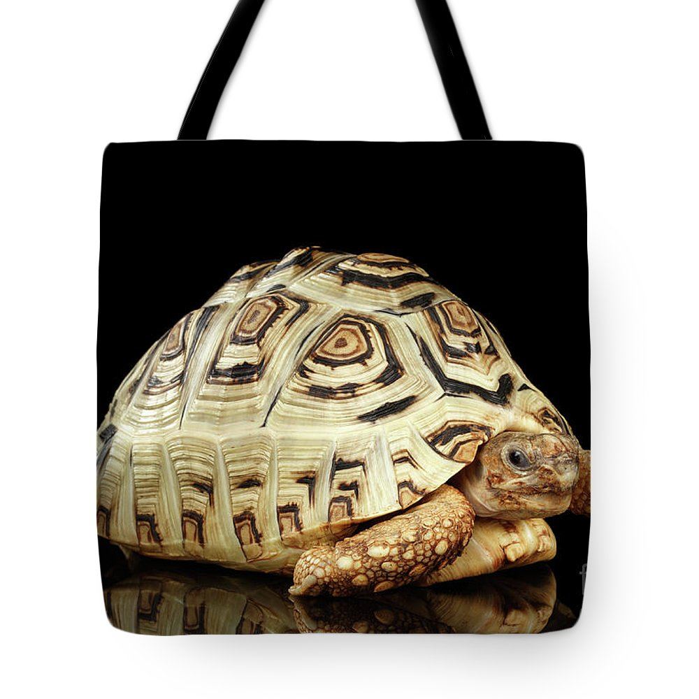 Tortoise Tote Bag featuring the photograph Closeup Leopard Tortoise Albino,stigmochelys Pardalis Turtle With White Shell On Isolated Black Back by Sergey Taran