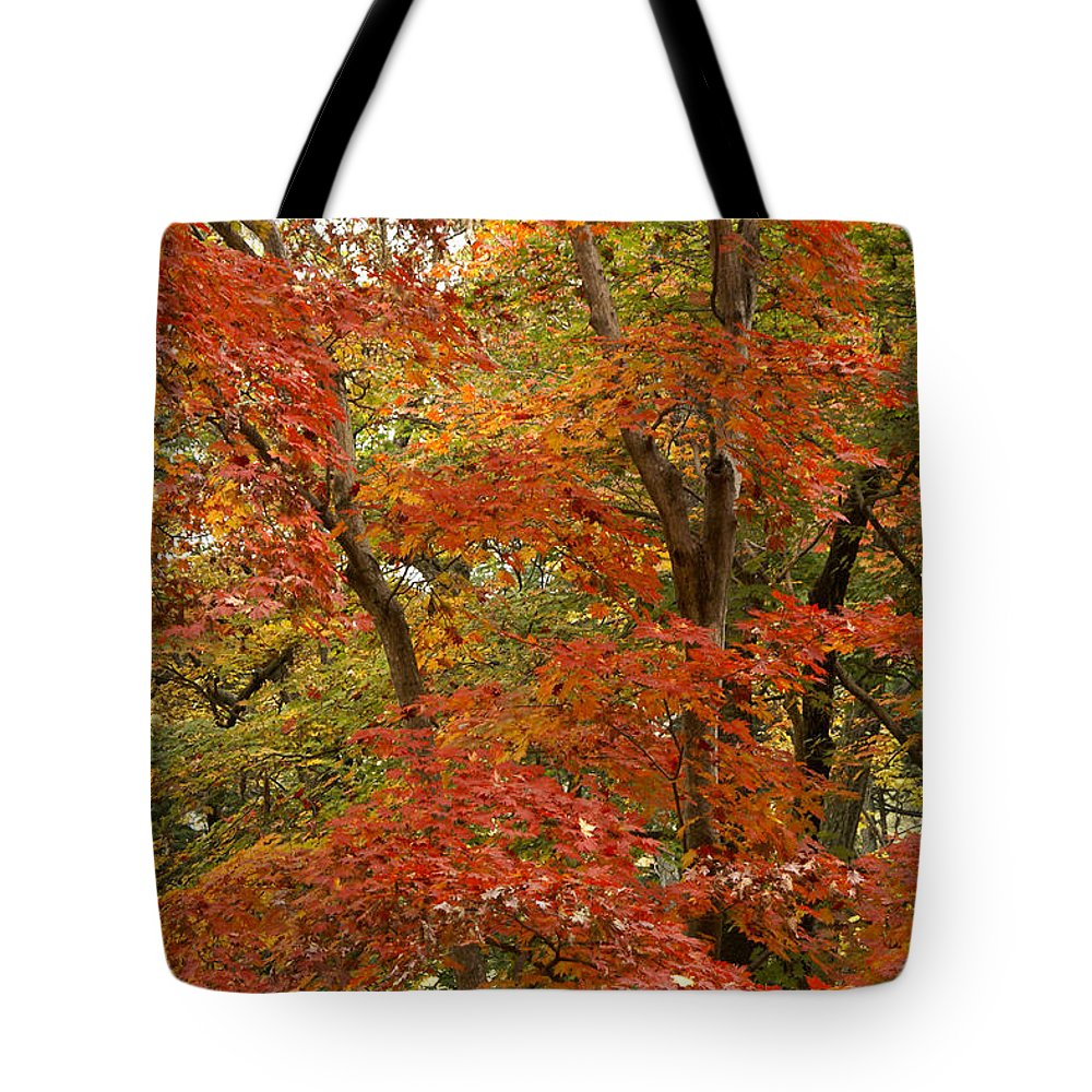 Autumn Tote Bag featuring the photograph Colors Of Autumn by Michele Burgess