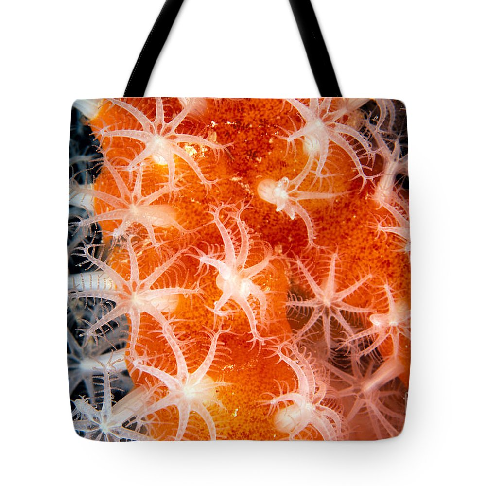 C1916 Tote Bag featuring the photograph Coral, Close-up by Dave Fleetham - Printscapes