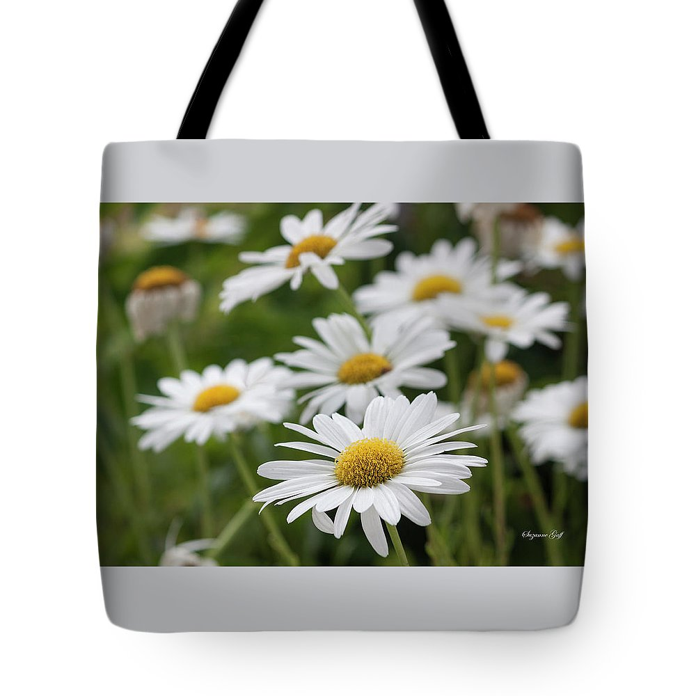 Photograph Tote Bag featuring the photograph Daisy Delight by Suzanne Gaff