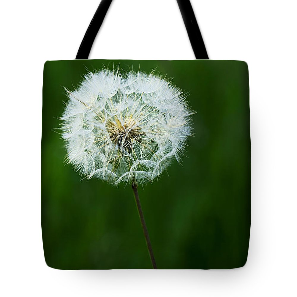 Beautiful Tote Bag featuring the photograph Dandelion by Ivan Slosar
