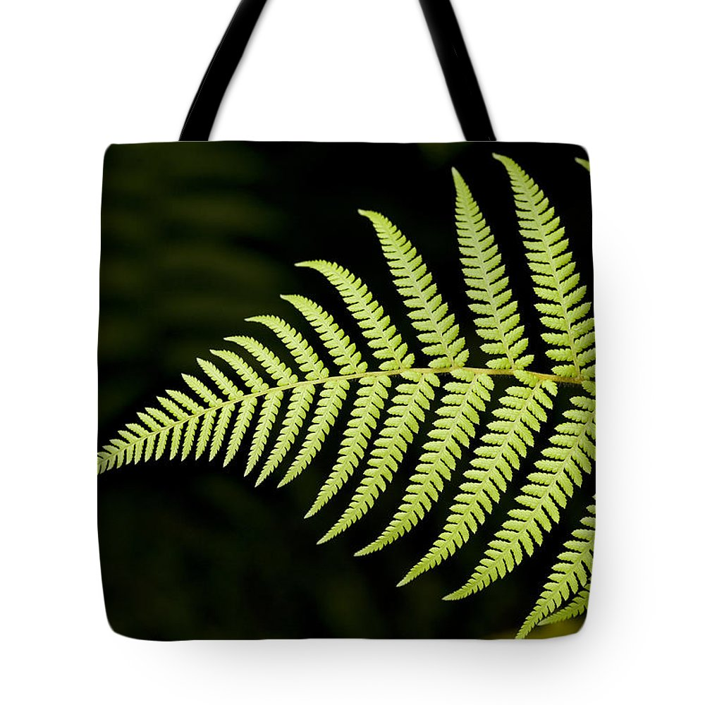 Closeups Tote Bag featuring the photograph Detail Of Asian Rain Forest Ferns by Tim Laman