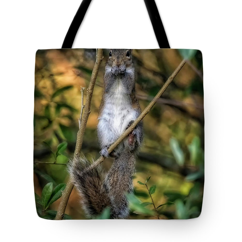 Eastern Gray Squirrel Tote Bag featuring the photograph Eastern Gray Squirrel by Joseph Rainey