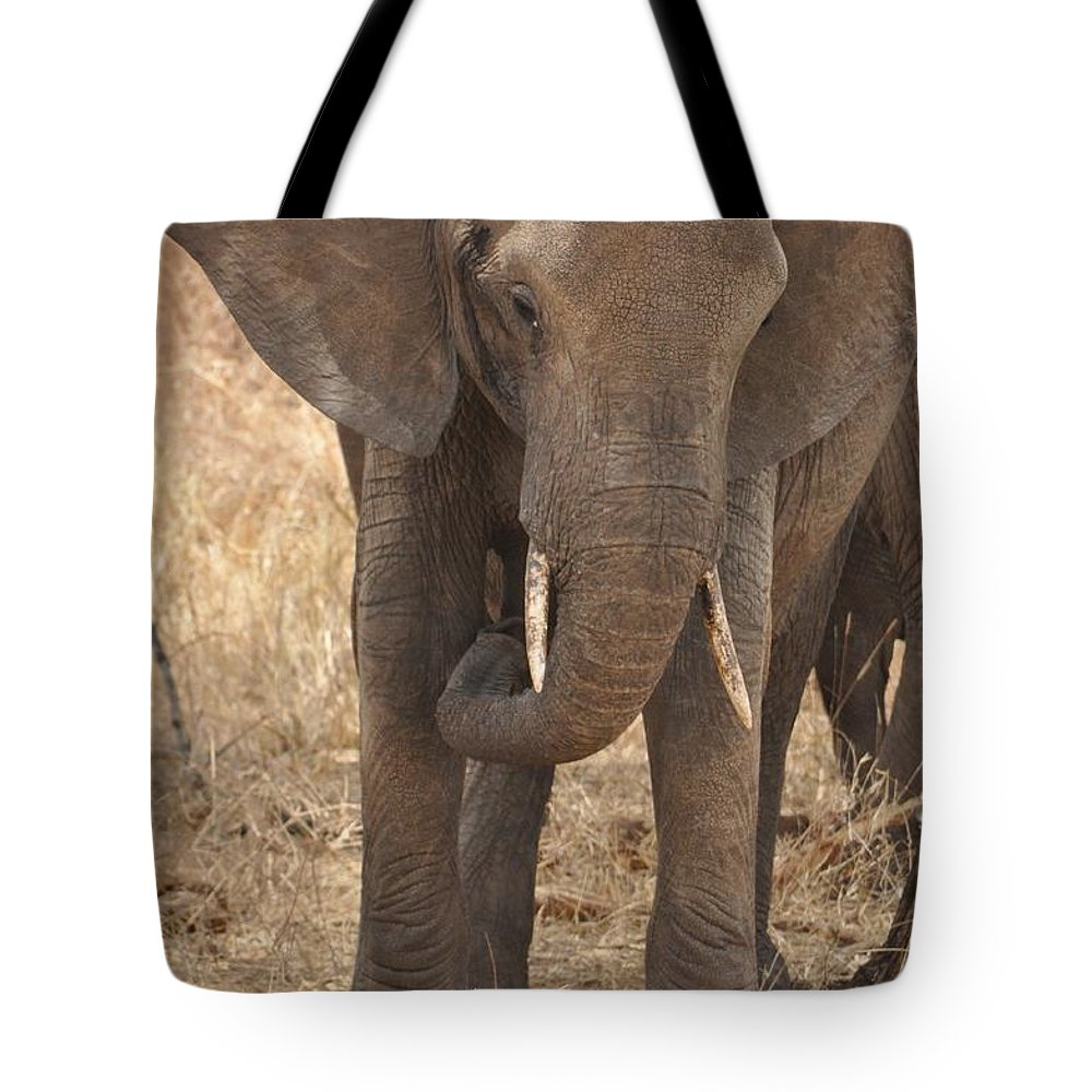 Elephant Tote Bag featuring the photograph Elephant by Rachel Young