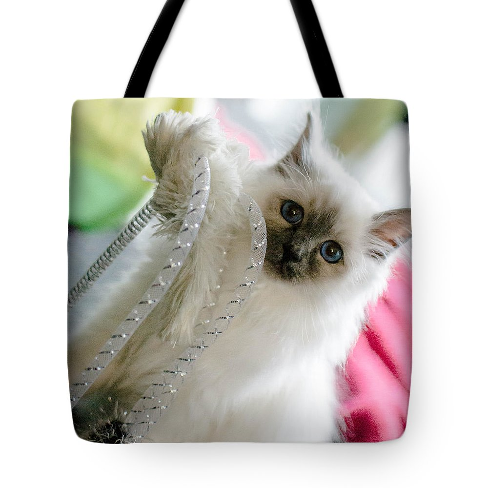 Animal Tote Bag featuring the photograph Ernie The Birman Kitty by Shivonne Ross