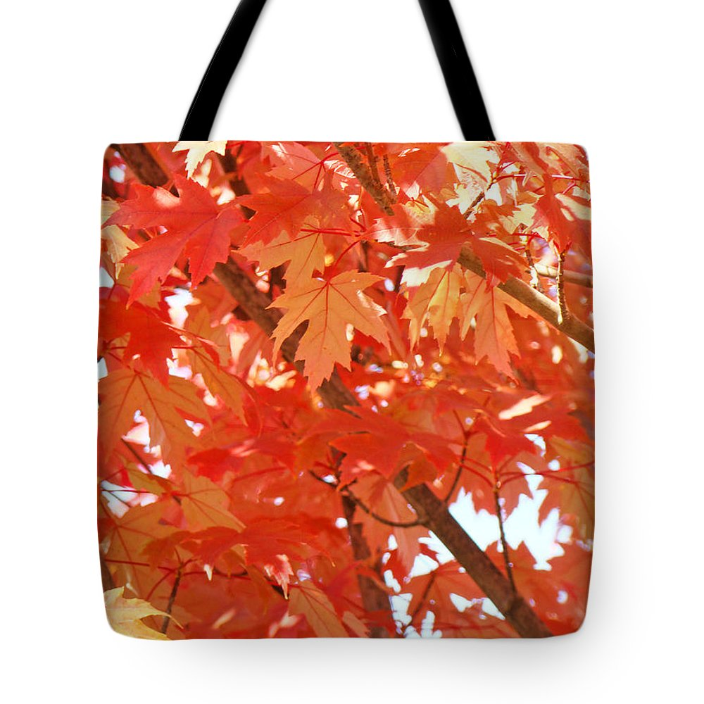 Autumn Tote Bag featuring the photograph Fall Trees Colorful Autumn Leaves Art Baslee Troutman by Baslee Troutman