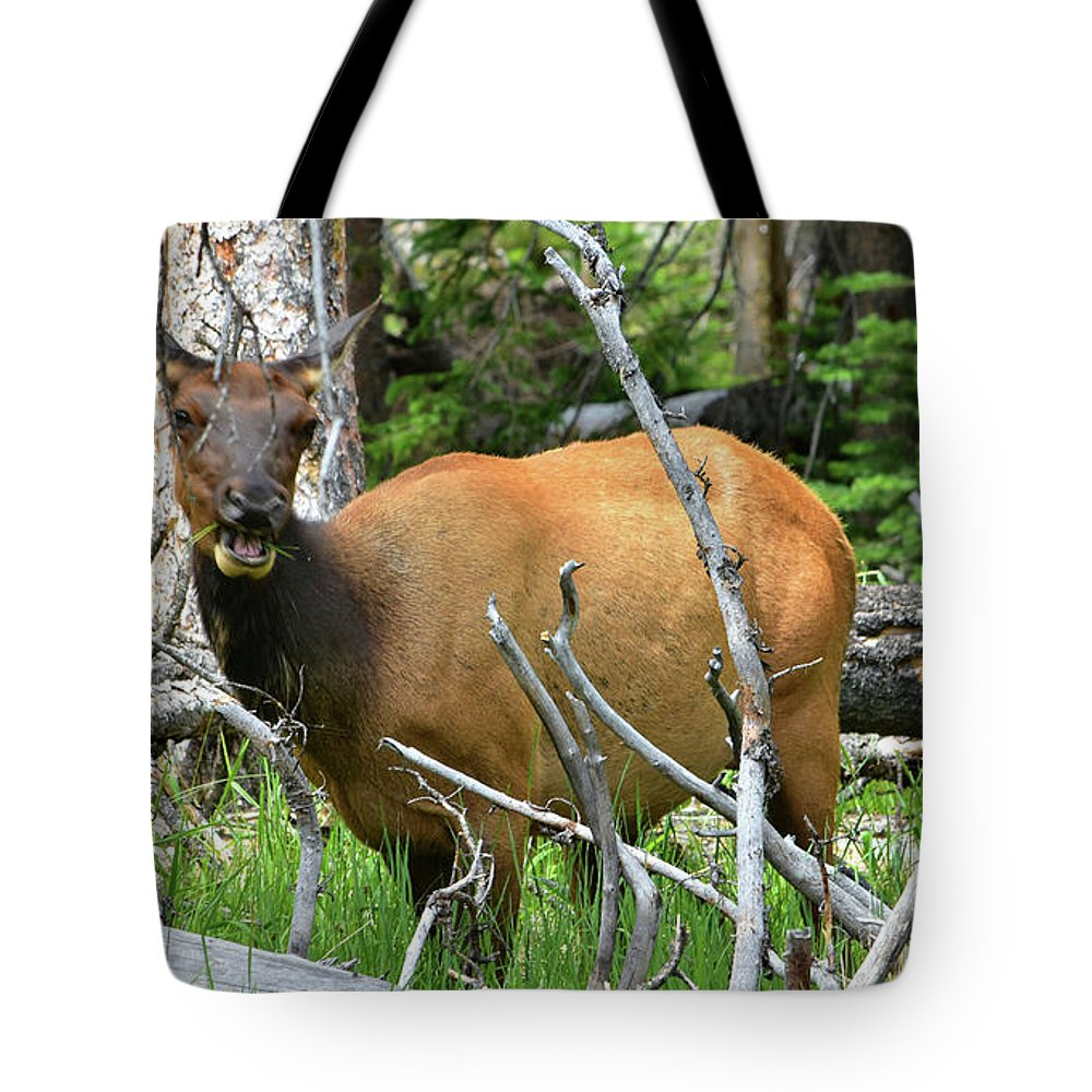 Yellowstone Tote Bag featuring the photograph Female Elk Yellowstone by Hughes Country Roads Photography