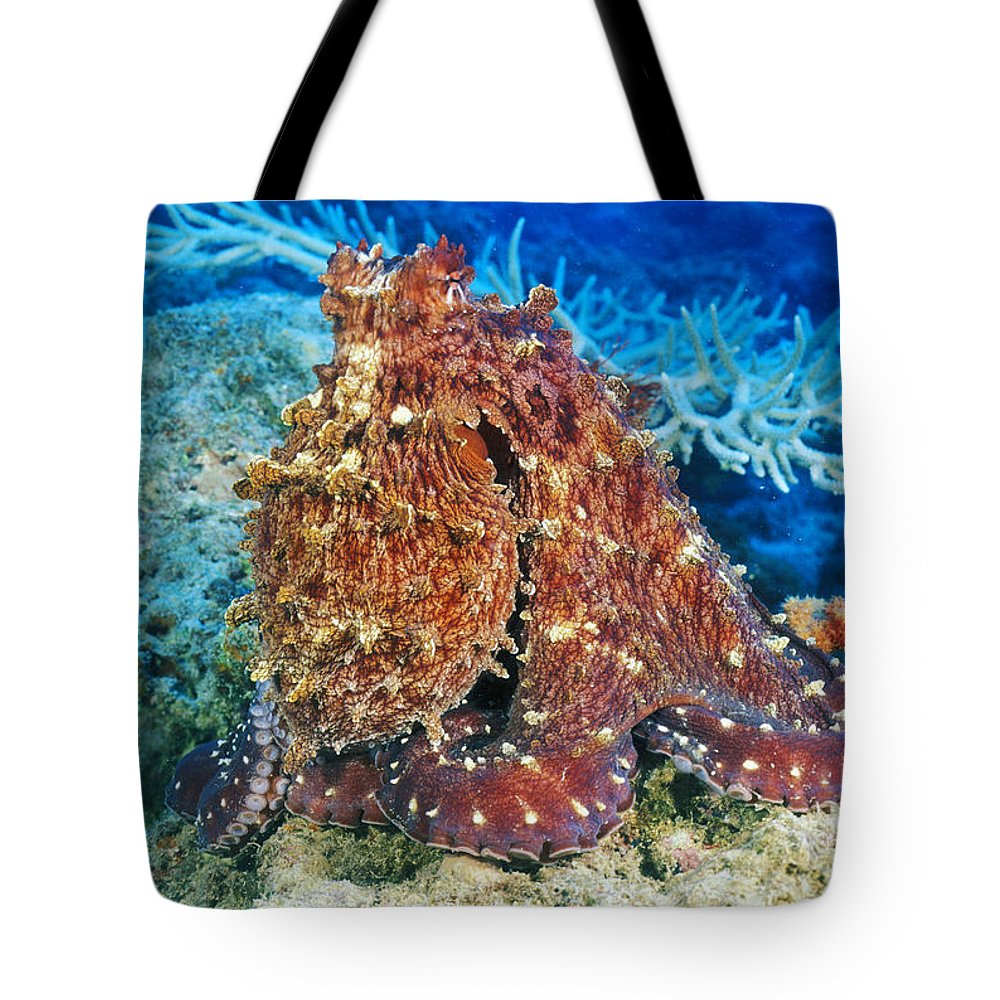 30-pfs0115 Tote Bag featuring the photograph Fiji, Day Octopus by Dave Fleetham - Printscapes