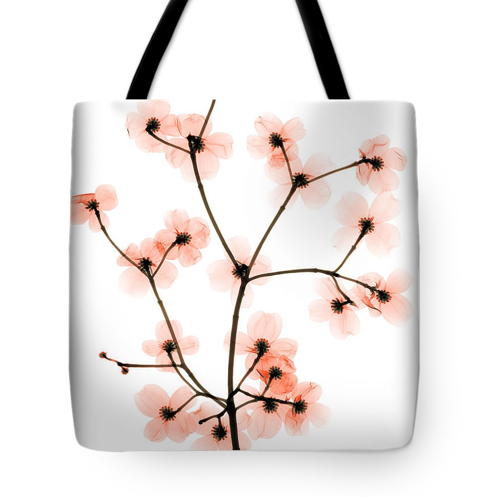 Tree Tote Bag featuring the photograph Flowering Dogwood X-ray by Ted Kinsman