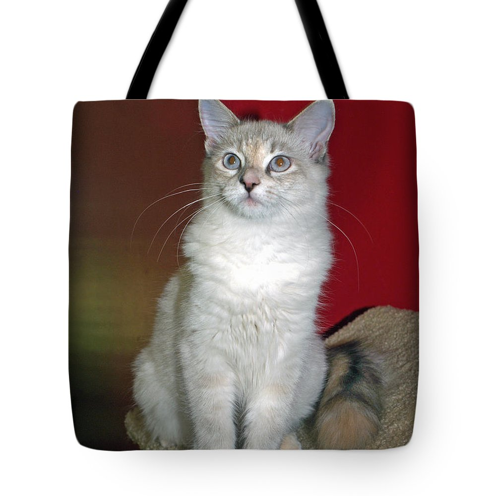 Cat Tote Bag featuring the photograph Fluffy by Bob Johnson
