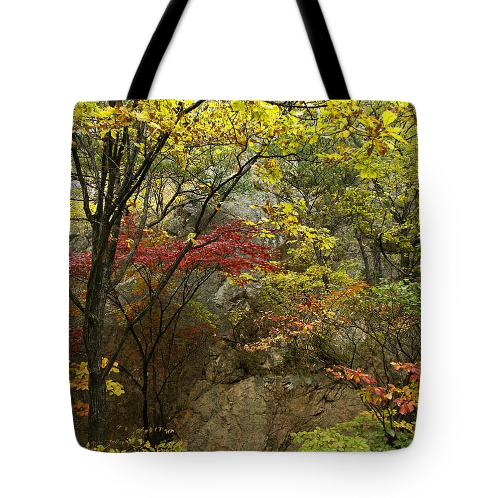 Autumn Tote Bag featuring the photograph Forest In Autumn by Michele Burgess