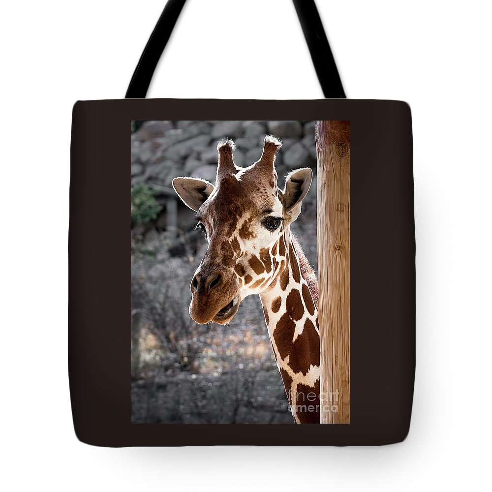 Colorado Springs Zoo Tote Bag featuring the photograph Giraffe Head by Jennifer Mitchell