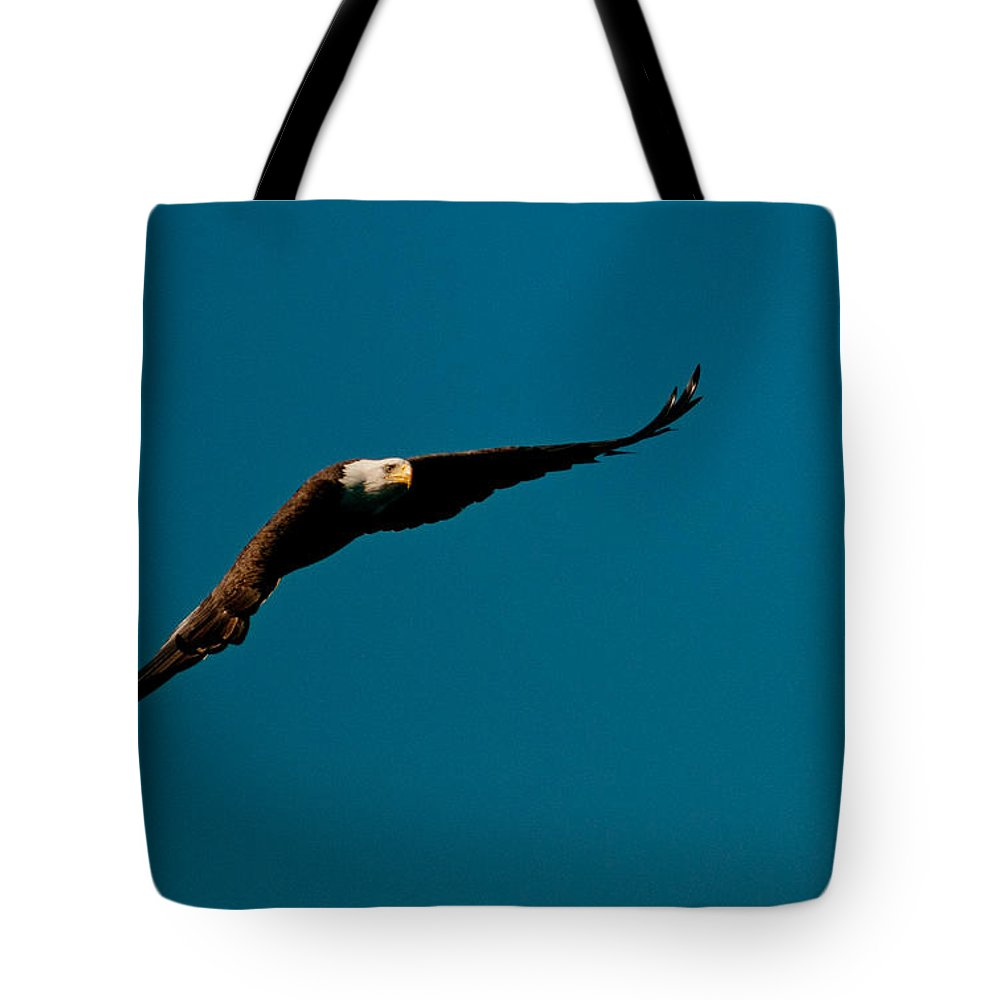 Eagle Tote Bag featuring the photograph Glider by Paul Mangold