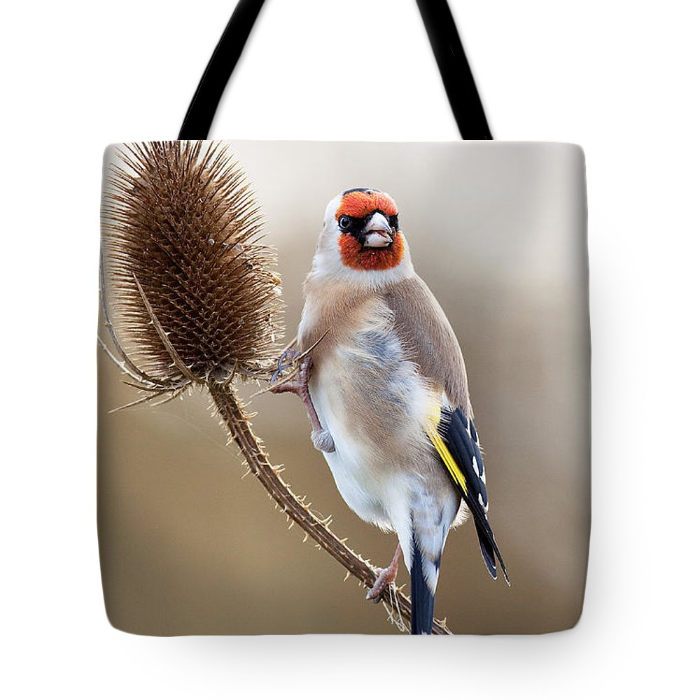 Goldfinch Tote Bag featuring the photograph Goldfinch On Teasle by Bob Kemp