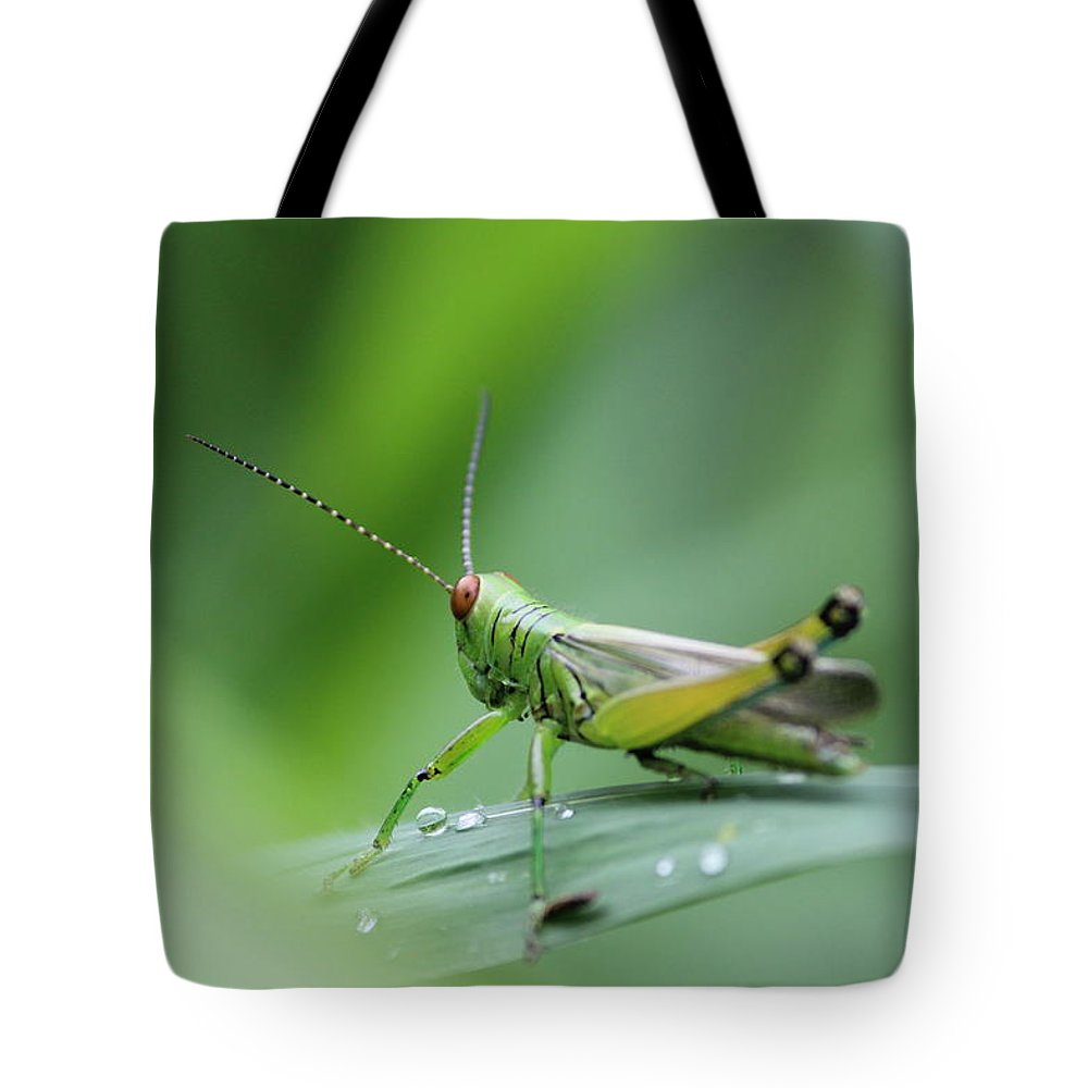 Tote Bag featuring the photograph Grasshopper by Arnab Mukherjee