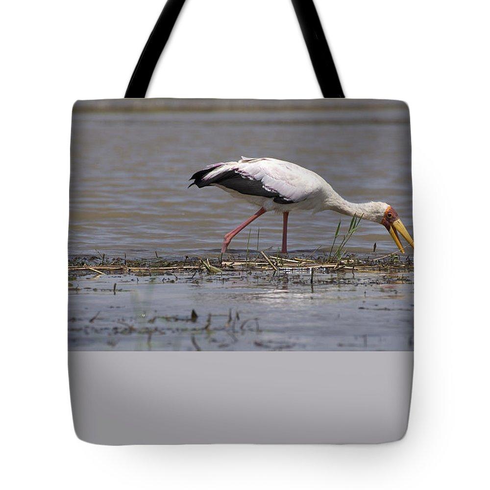 Cormorant Tote Bag featuring the photograph Great Rift Birds by Aidan Moran