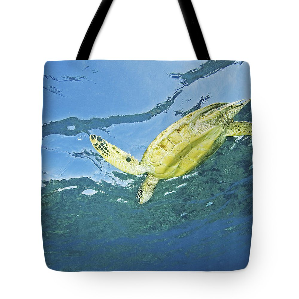 66-csm0245 Tote Bag featuring the photograph Hawaii, Green Sea Turtle by Ron Dahlquist - Printscapes