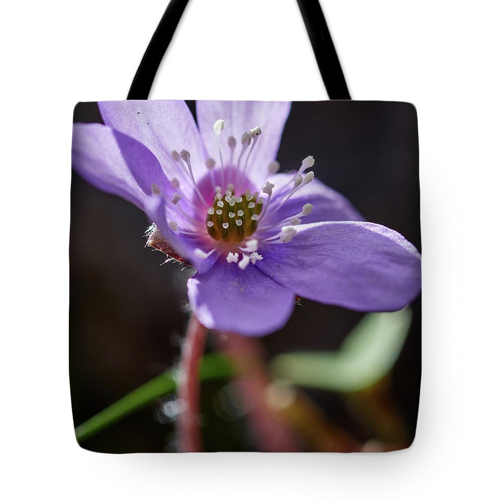 Anemone Hepatica Tote Bag featuring the photograph Hepatica 4 by Jouko Lehto