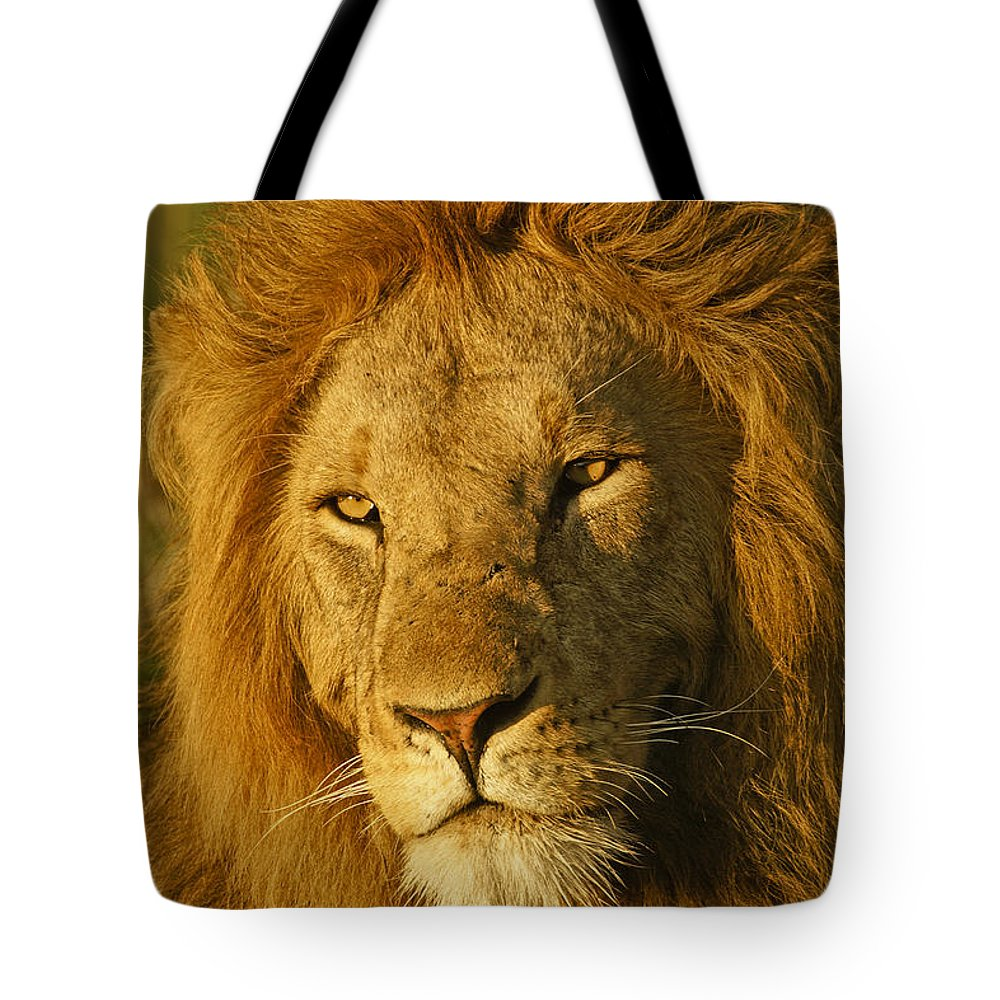 Lion Tote Bag featuring the photograph His Majesty by Michele Burgess