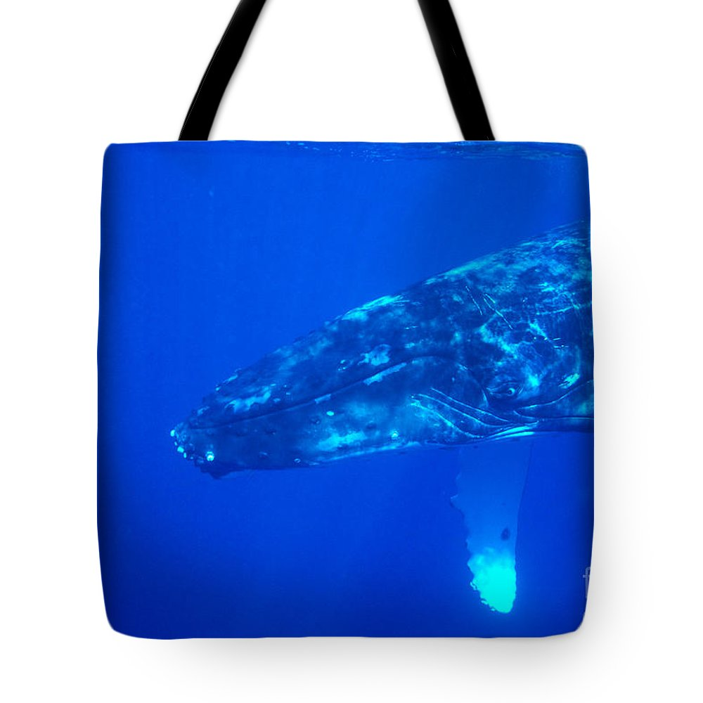 Amaze Tote Bag featuring the photograph Humpback Whale by Dave Fleetham - Printscapes