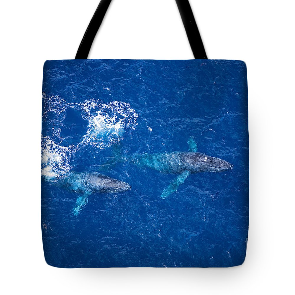 Above Tote Bag featuring the photograph Humpback Whales Aerial by Ron Dahlquist - Printscapes