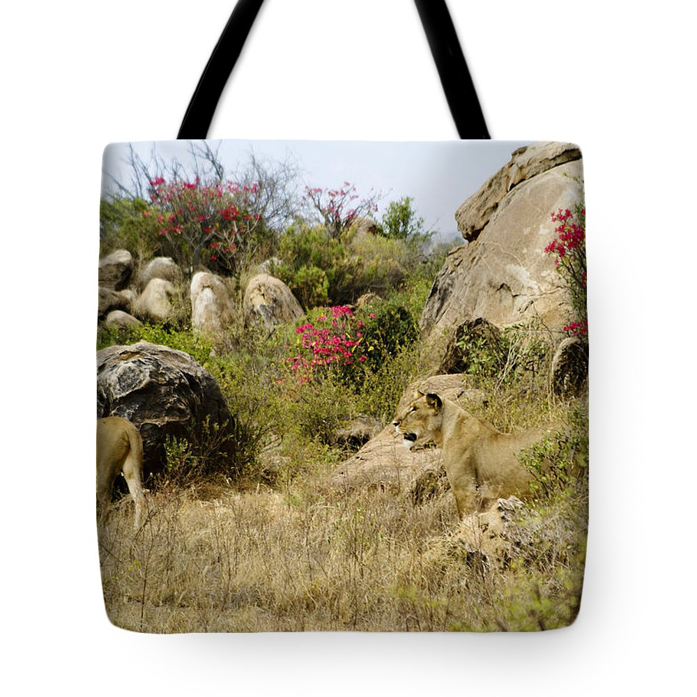 Lion Tote Bag featuring the photograph Hunting Lionesses by Michele Burgess