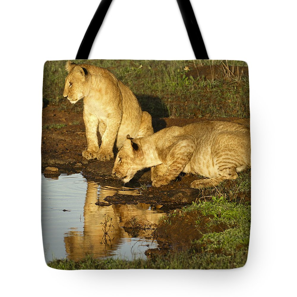 Lion Tote Bag featuring the photograph I Can See Myself by Michele Burgess