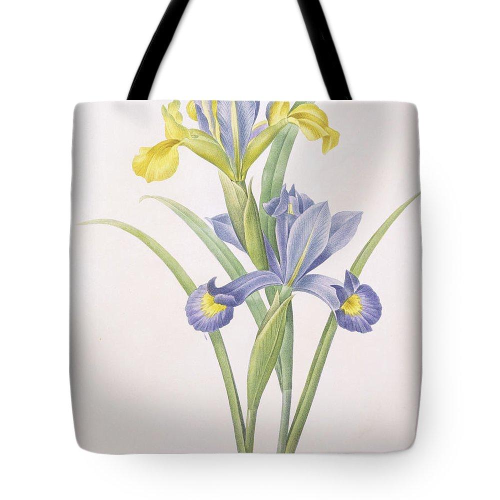 Iris Tote Bag featuring the drawing Iris Xiphium by Pierre Joseph Redoute