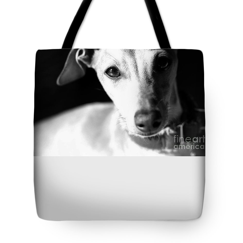 Editorial Tote Bag featuring the photograph Italian Greyhound Portrait In Black And White by Angela Rath