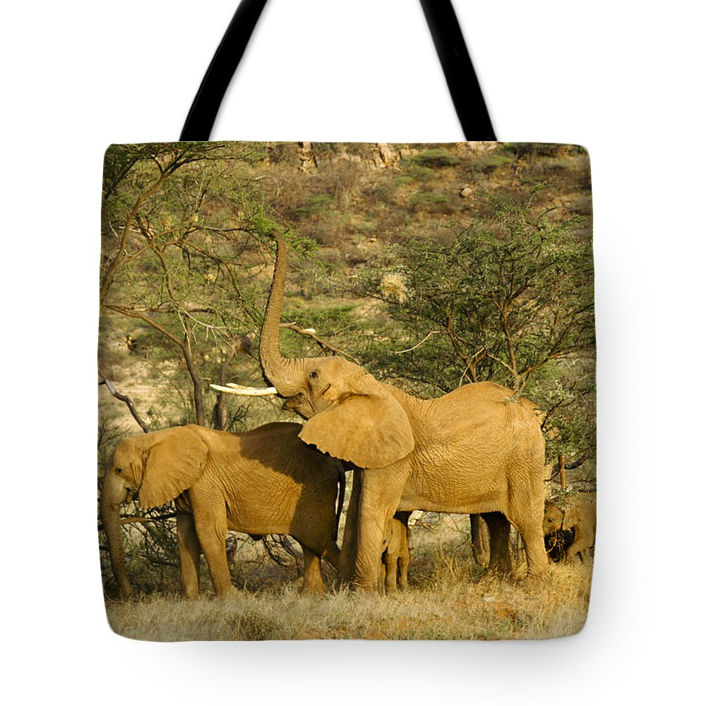 Africa Tote Bag featuring the photograph It's A Stretch by Michele Burgess